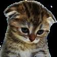 :tiredcat2: